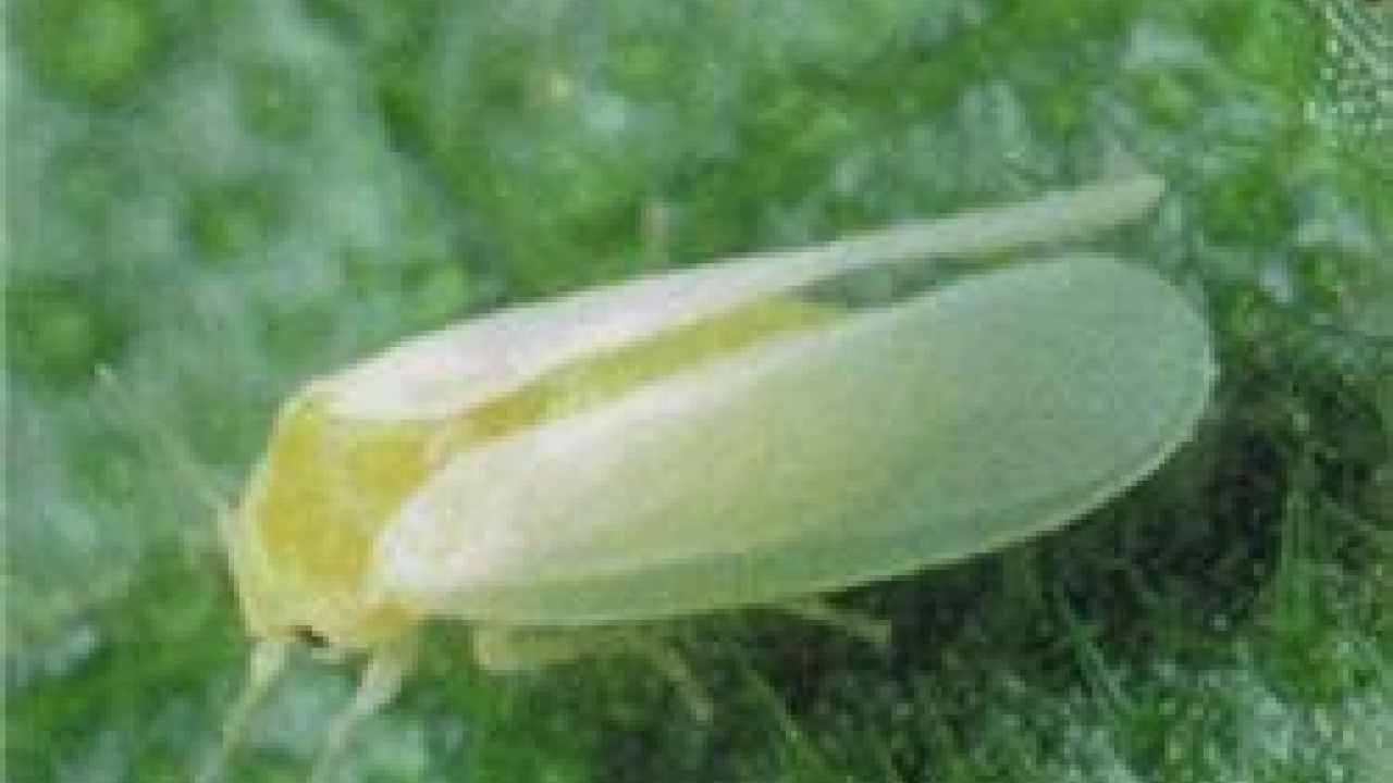 UK plant health interceptions