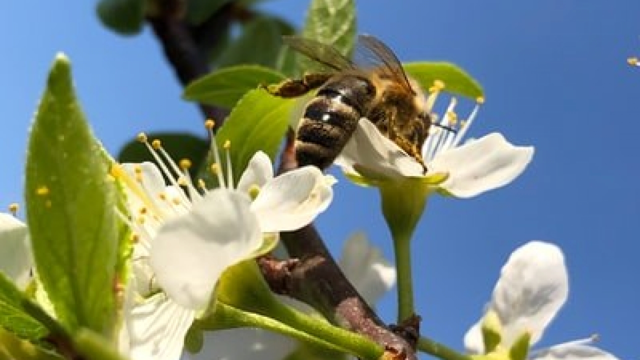EFSA analysis of scientific evidence on bee mortality