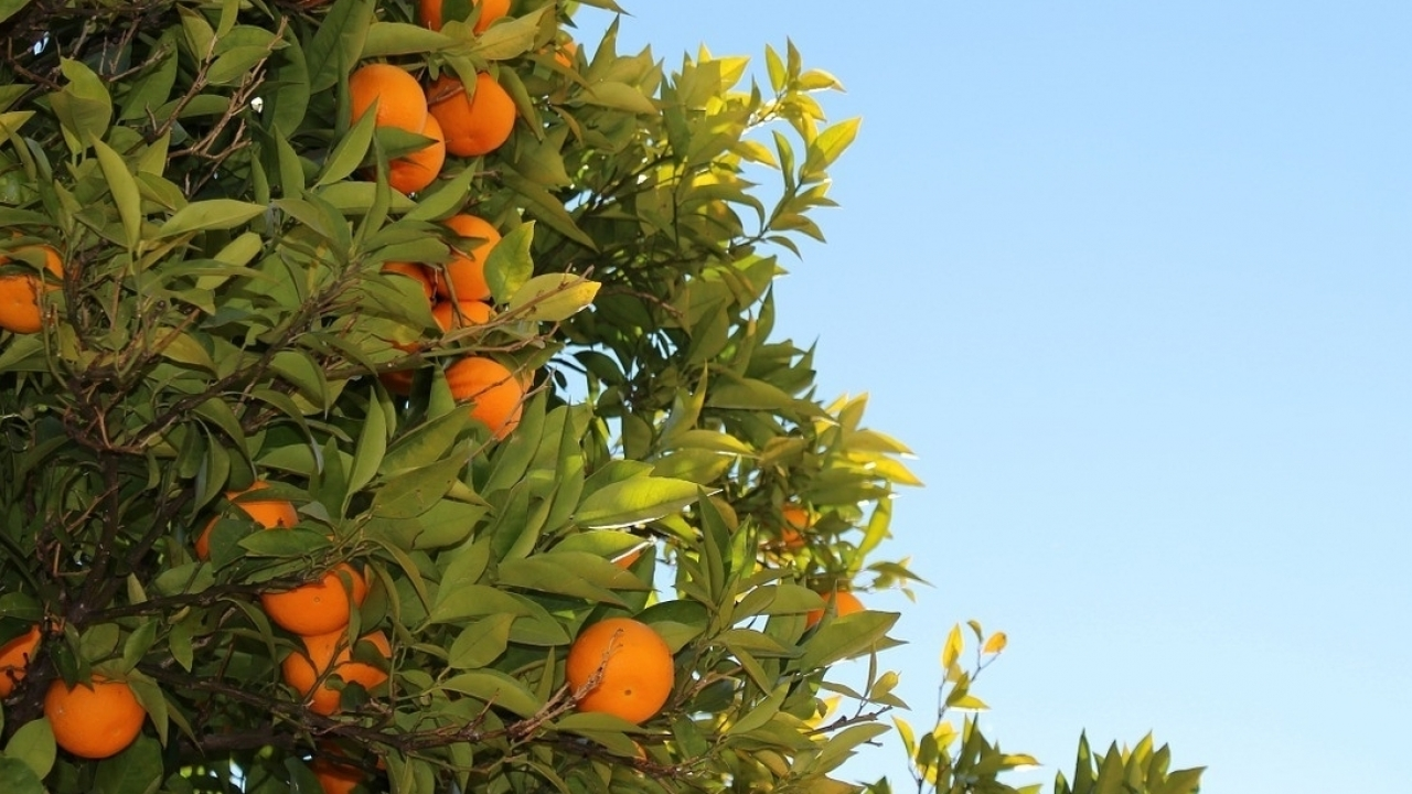 USA maintains current level of additional duties on EU citrus
