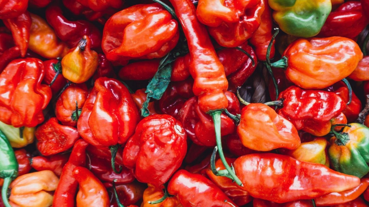 EFSA reviews modification of MRL for pyridaben in pepper